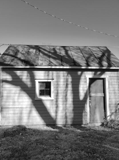 Roanoke Willow