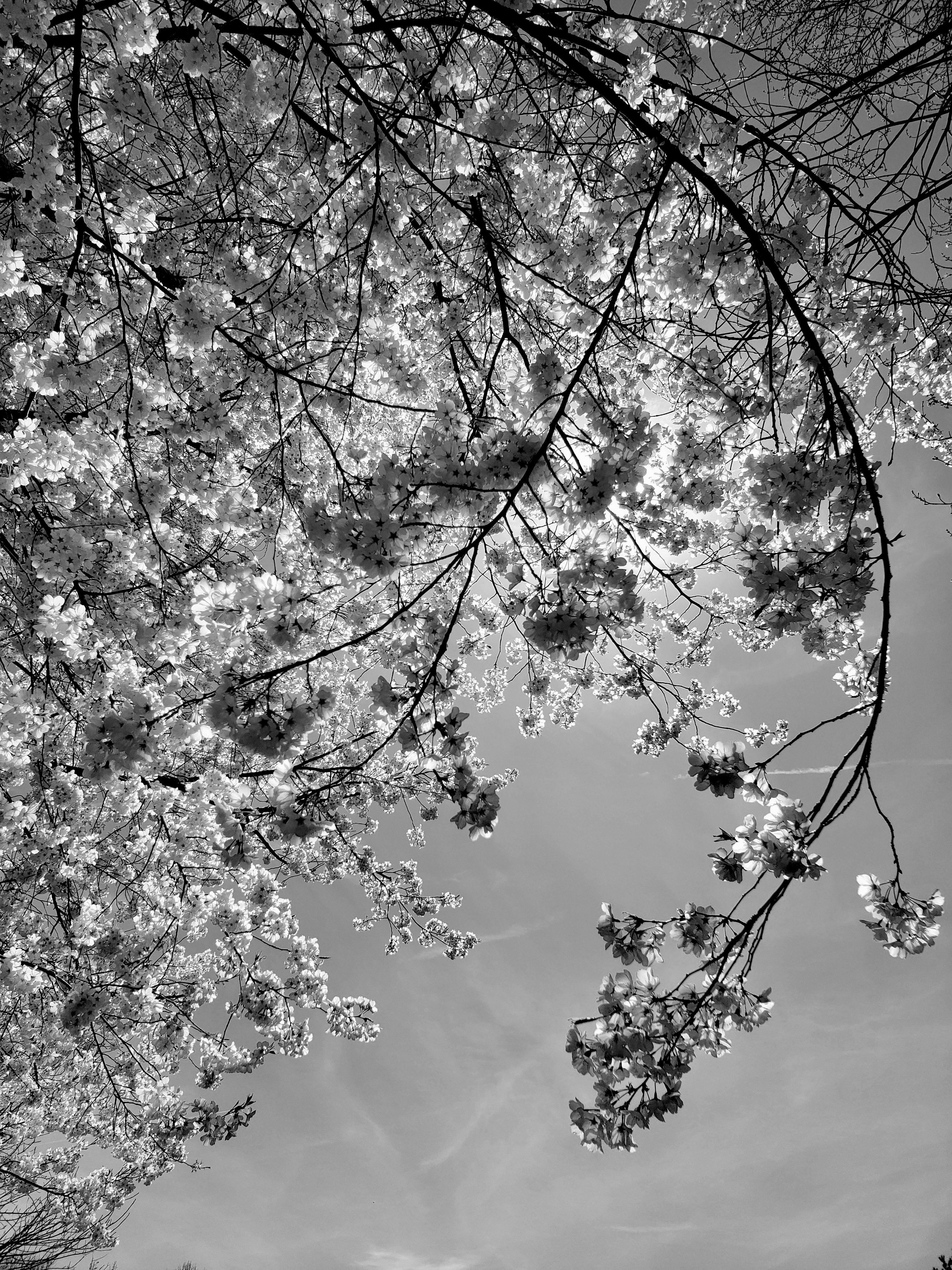 peak blossom