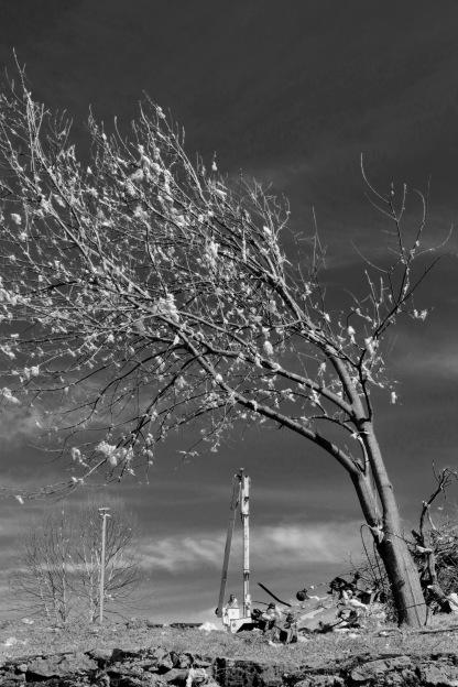 Insulation tree, North Nashville, 3-5-2020